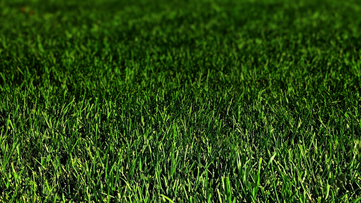 Quality Commercial Grounds Maintenance
